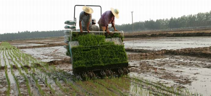 Rice Transplanter Market: Improving Technique Of Planting For Farmers